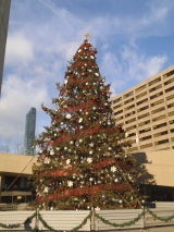 Christmas Tree at Nathan Phillips Square